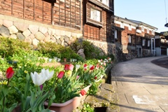 春の彩:城端土蔵