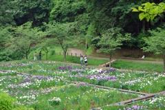 花菖蒲園の風景