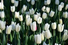 白い花にピンクのアクセント