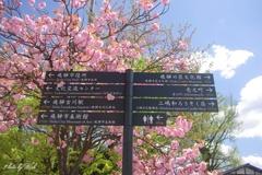 飛騨古川の案内標識