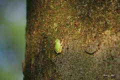 雨蛙の木登り