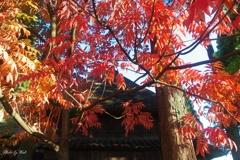 秋色に彩る