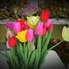 春の便り待ち遠しい