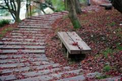 落ち葉の回廊