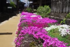 飛騨古川の春景色