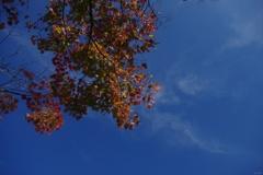 秋空を見上げて