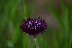 ポツンと咲く春の花