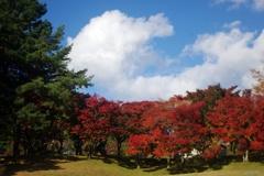 秋空と紅葉