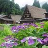 7月の菅沼集落 季節の花と共に