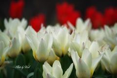 季節本番を告げる花