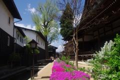 飛騨古川:芝桜