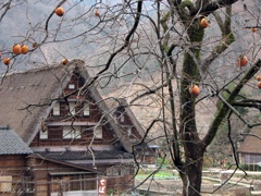 年末の菅沼集落:2006年度撮影
