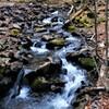 八千穂高原自然園の渓流、苔、流木と岩