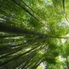 鎌倉「竹の寺」報国寺