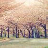 いつか見た春