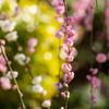咲き満ちて枝垂梅
