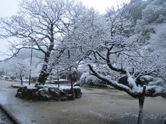 太宰府天開稲荷と雪 ①