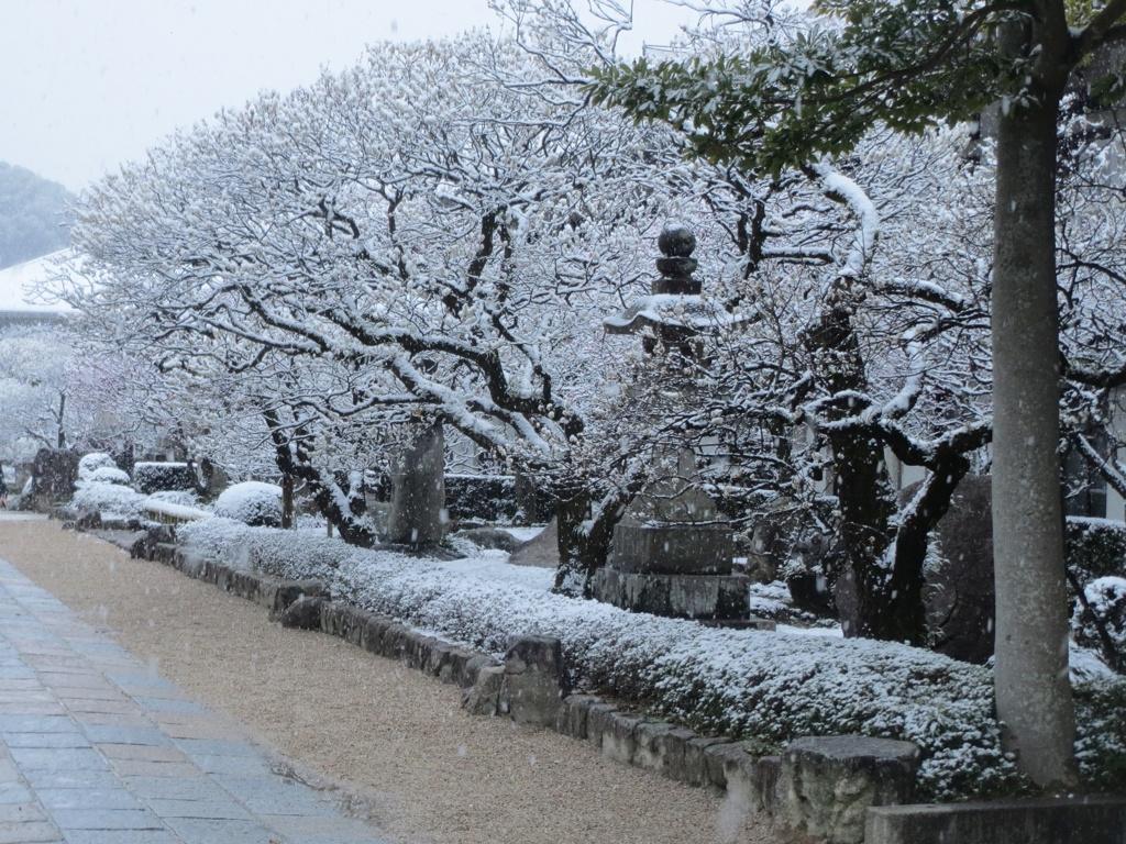 太宰府天満宮と雪 ②