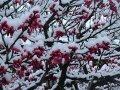 太宰府天満宮と雪 ⑤