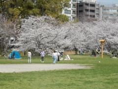 福岡城の桜 ⑤