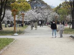 福岡城の桜 ③