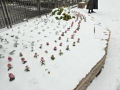 雪の街中 ⑤