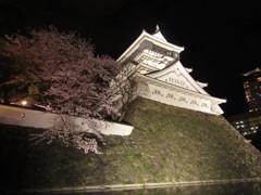 夜の小倉城と桜