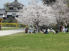 福岡城の桜 ④