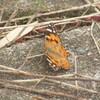 ヒラヒラ動く蝶