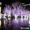 雨の日の桜イルミネーション①