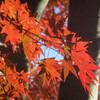 秋の紅葉 ②