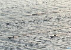 夜明けと共に漁場を目指す