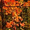 雑木林に秋の足音