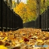 晩秋の遊歩道