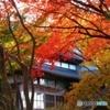 日本家屋の秋-2