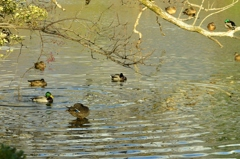 水鳥の遊ぶ池