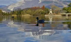 水鳥の楽園 Ⅰ