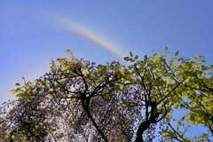 虹にタッチ