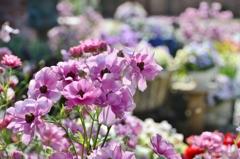 花いっぱいのしあわせ