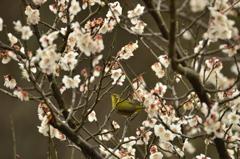 春ですね。。♪~