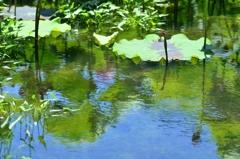 蓮池の絵画