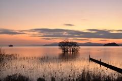 湖北薄桃の夕暮れ