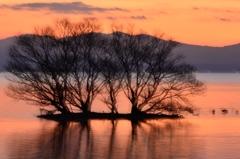 夕映えの水中木