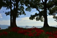 琵琶湖の秋