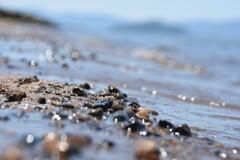 琵琶湖 初夏の浜辺