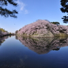 彦根城の春Ⅰ