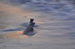 流木 ~夕暮れの浜辺にて~
