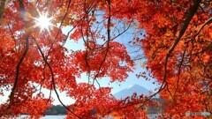 目いっぱいの紅葉