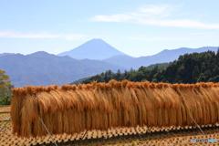 稲のオダガケ