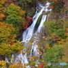 盛秋 霧降の滝